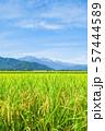 秋の田園風景 (大町市から爺ヶ岳・鹿島槍ヶ岳・五竜岳を望む) 57444589