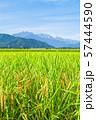 秋の田園風景 (大町市から爺ヶ岳・鹿島槍ヶ岳・五竜岳を望む) 57444590