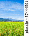 秋の田園風景 (大町市から爺ヶ岳・鹿島槍ヶ岳・五竜岳を望む) 57444591