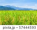 秋の田園風景 (大町市から爺ヶ岳・鹿島槍ヶ岳・五竜岳を望む) 57444593