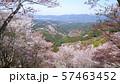 吉野山 上千本 57463452