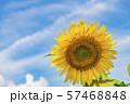 【明野 ヒマワリ畑】 57468848