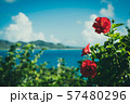 ハイビスカス 夏休み 花 リゾート 南国 レトロ 57480296