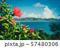 ハイビスカス 夏休み 花 リゾート 南国 レトロ 57480306