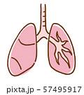 肺 呼吸器 内臓 57495917