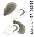 牡蠣 イラスト 57498345