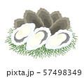 牡蠣 イラスト 57498349