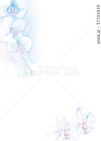 はがきテンプレート 胡蝶蘭 水彩イラスト 57503810
