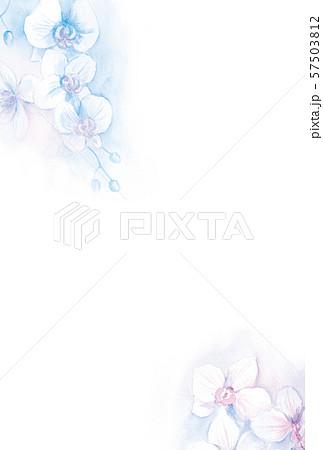 はがきテンプレート 胡蝶蘭 水彩イラスト 57503812