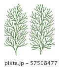 ヒバの木の葉っぱ ベクター イラスト 57508477