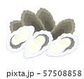 牡蠣 イラスト 57508858