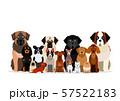 さまざまな犬のグループ 57522183