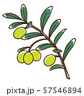 グリーンオリーブの実と枝 57546894