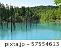 北海道美瑛町の青い池 57554613