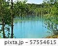 北海道美瑛町の青い池 57554615