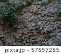 玄武洞の柱状節理 57557255