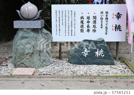 熊野神社(鹿児島県伊佐市大口山野)の幸桃(さちもも) 57565251