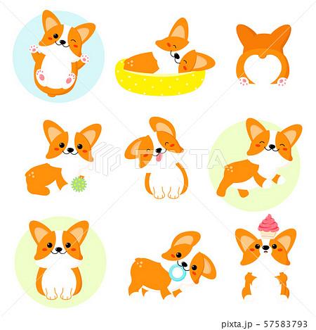 Set of cute corgi 57583793
