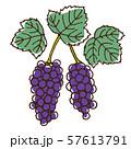 ブドウの実と葉 57613791