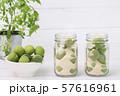 Close up of green plum, summer fruit 013 57616961