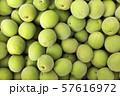 Close up of green plum, summer fruit 008 57616972