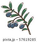 ブラックオリーブの実と枝 57619285
