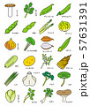 春季の野菜 57631391