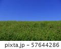 青空と緑 57644286