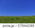 青空と緑 57644289