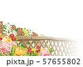 菊 57655802