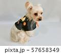 ハロウィン仮装した小型犬1 57658349
