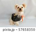 ハロウィン仮装した小型犬2 57658350