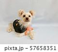 ハロウィン仮装した小型犬3 57658351