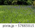 大田神社 57665015