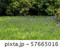 大田神社 57665016