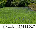 大田神社 57665017