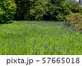 大田神社 57665018