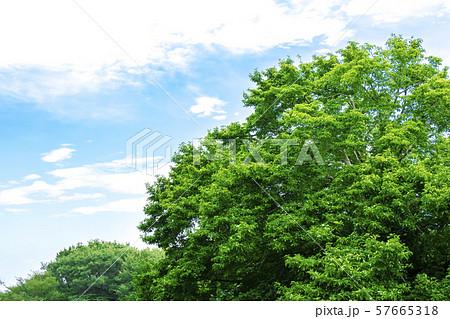 緑と青空の広がる風景 57665318