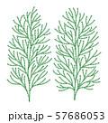 ヒバの木の葉っぱ ベクター イラスト 57686053