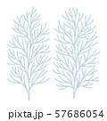 ヒバの木の葉っぱ ベクター イラスト 57686054