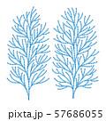 ヒバの木の葉っぱ ベクター イラスト 57686055