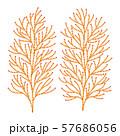 ヒバの木の葉っぱ ベクター イラスト 57686056
