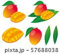 マンゴー 57688038