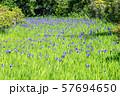 大田神社 57694650