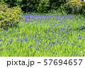 大田神社 57694657