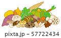秋季の野菜 57722434