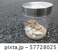 貝殻、夏の思い出 57728025