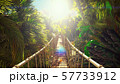 Wooden bridge over the green jungle. Green jungle trees and palm trees with blue sky and bright sun 57733912