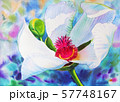 Realistic colorful of white flower  57748167