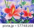 Watercolor painting original realistic pink,red 57748168